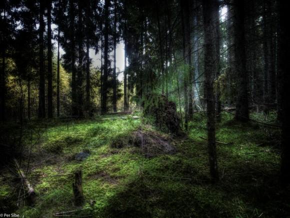 I en skog om høsten. (Foto Per Sibe)